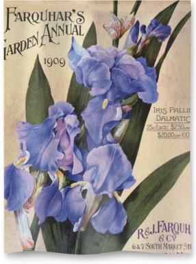 Iris Pallida Dalmatica