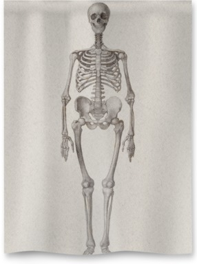 Human Skeleton: Frontal View