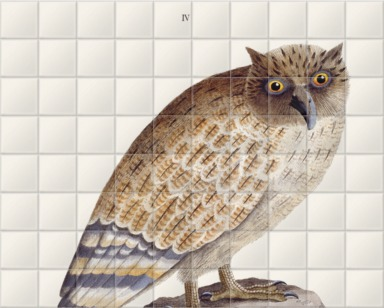 The Great Ceylonese Eared Owl