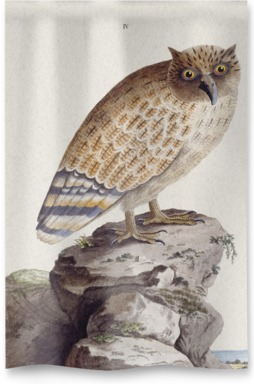The Great Ceylonese Eared Owl
