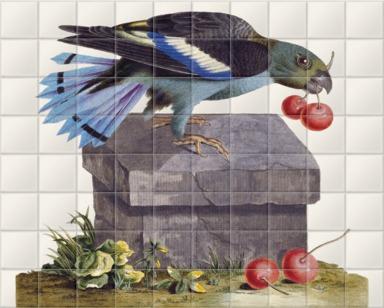 The Black-winged Parroquet