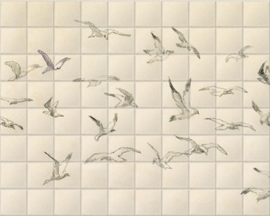 Studies of Birds