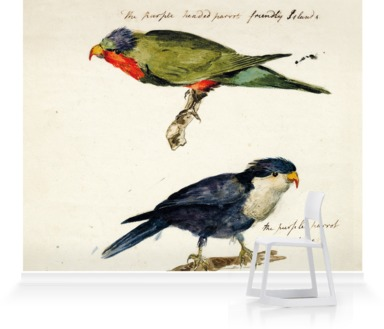 Two studies of Parrots