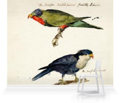 Two studies of Parrots