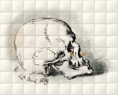 Study of a Skull