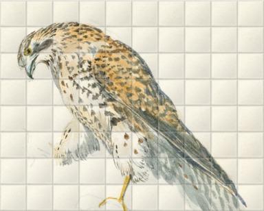 A Bird of Prey