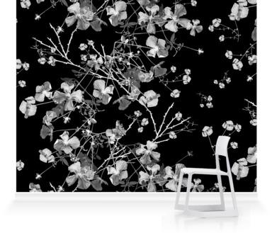 Clematis Black on White