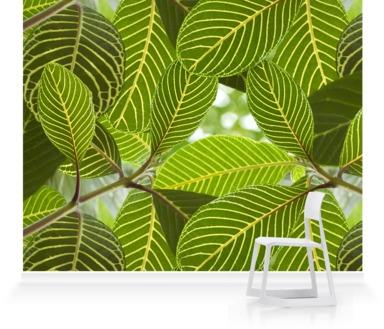Safari Leaf
