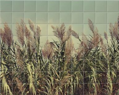 Rural Harvest