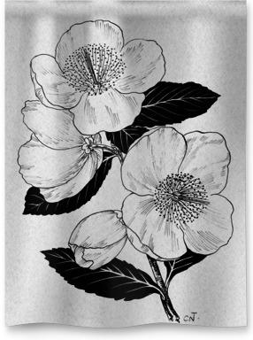 Eucryphia Nymansensis