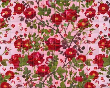 Avalon Rose