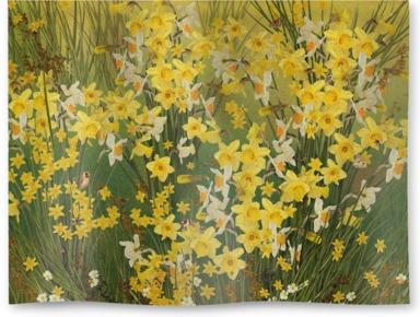 Welsh Daffodils - Green