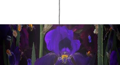Iris Panorama
