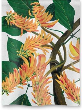 Flame Tree [Erythrina poeppigiana]