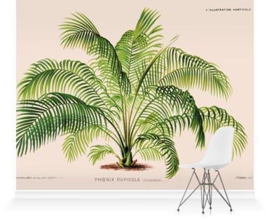 Cliff Date Palm [Phoenix rupicola]