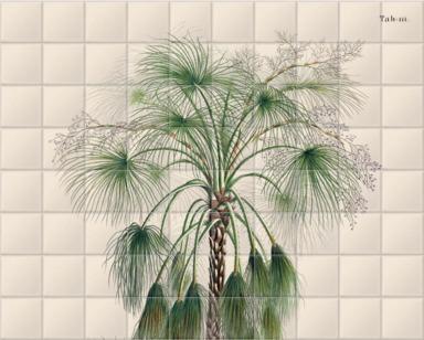 Sand Palm [Livistona humilis]