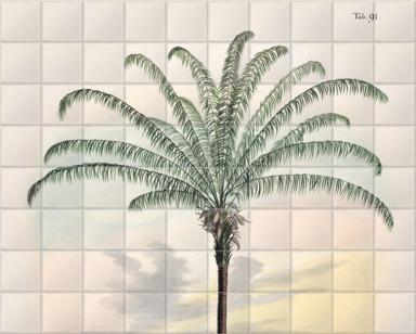 Canopy Palm [Maximiliana regia]