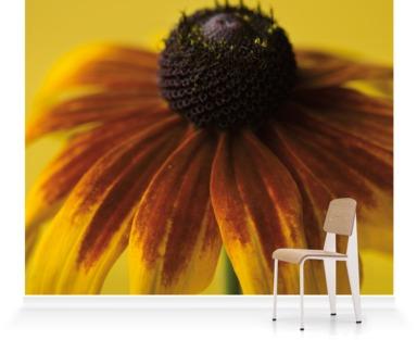 The Flower of Rudbeckia Golden Jubilee