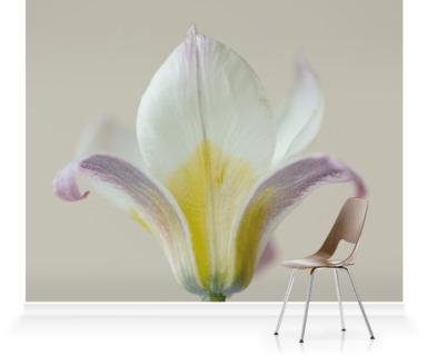 Narcissus WP Milner