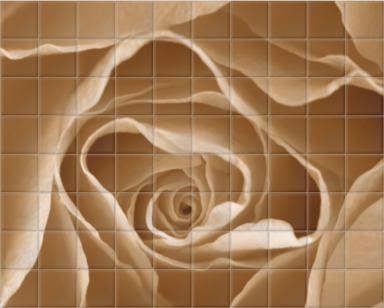 Centre of a Rose I