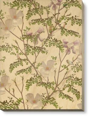 Magnolia - Pannacotta