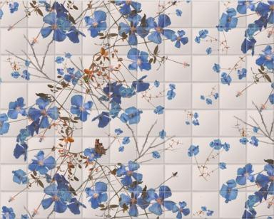 Clematis Powder Blue