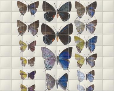 Lycaenidae Hairstreak Butterflies
