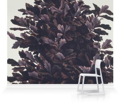 Oak: Quercus rober niger