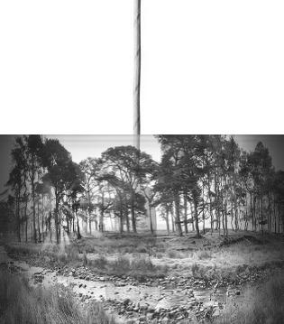 Forest of Bowland II B&W