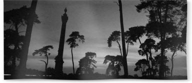 Elveden War Memorial and Scots Pines B&W