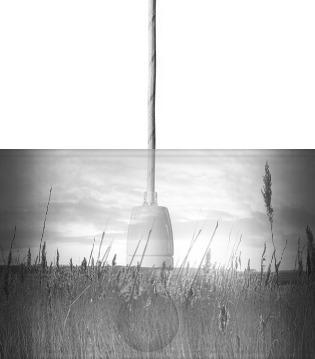 Winter Reeds B&W