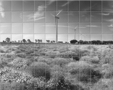 Panorama Of Wind Turbines And Wildflowers B&W
