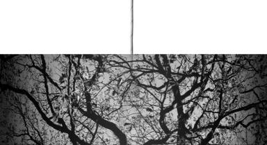 Oak Trees in Winter B&W