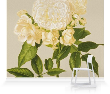 Rosa' Aime Vibert''