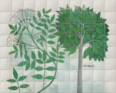 Botanical illustration II