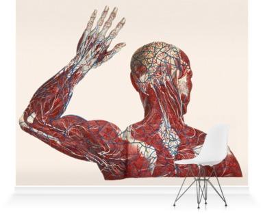Anatomical print II