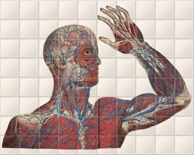 Anatomical print III