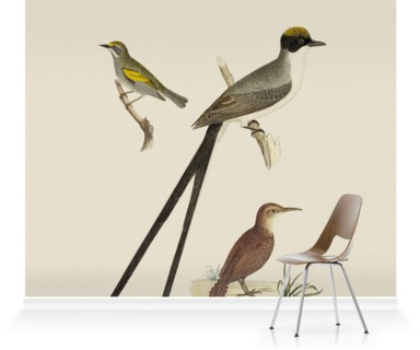 Flycatcher. Anteater. Warbler