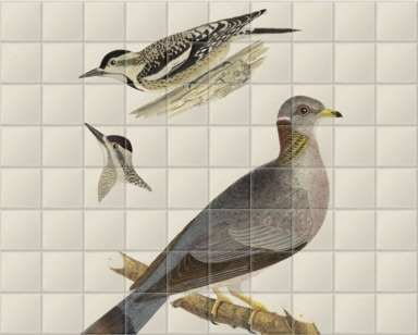 Woodpeckers and Pigeon