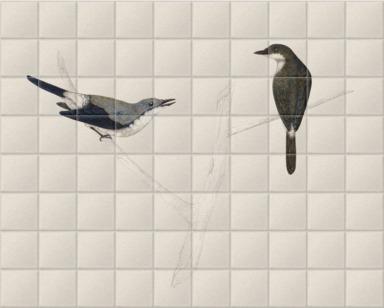 Malay Pied Cuckoo-Shrikes