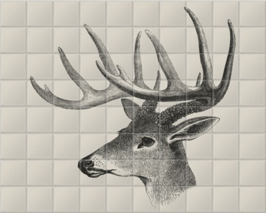 American Deer