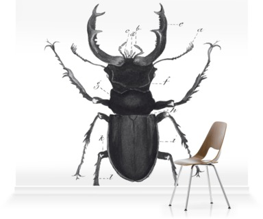 Lucanus Cervus - Beetle