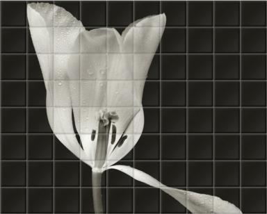 White Tulip II
