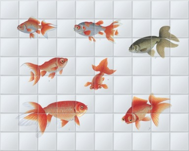 Various Goldfish