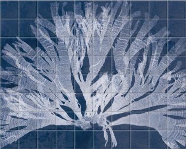 Dictyota Atomaria Cyanotype