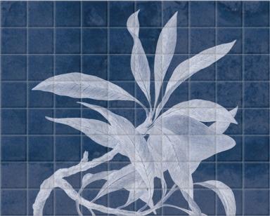 Xylomeleum Pyriforme Cyanotype
