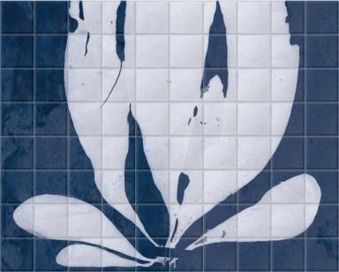 Iridaea Edulis Cyanotype