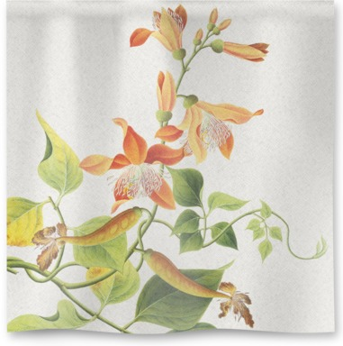 Drawings of flower subjects II