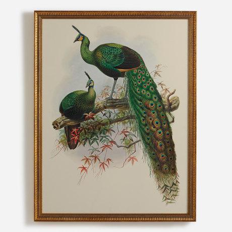 'Pavo Muticus, Javan Peafowl'