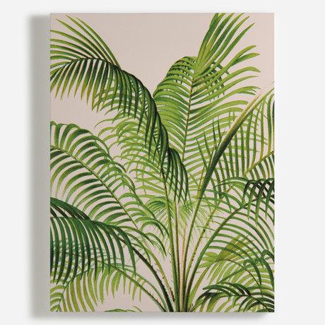 'Cliff Date Palm [Phoenix rupicola]'
